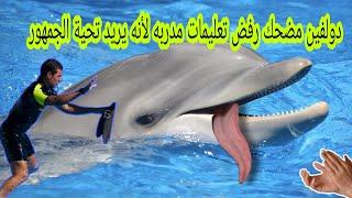 دولفين مضحك رفض تعليمات مدربه حتى حصل على تحية كبيرة من الجمهور funny dolphin Wants applause
