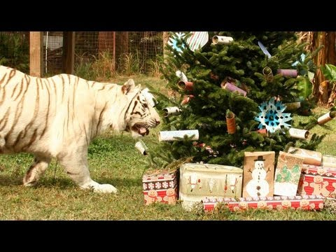 Xxx Mp4 A Big Cat Christmas 3gp Sex