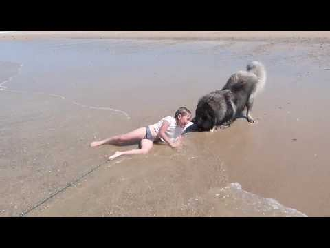 Xxx Mp4 Little Girl Rescued By Pet Dog 3gp Sex