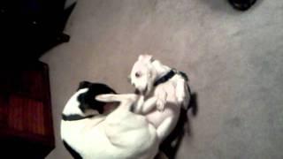 Dog gets a BJ