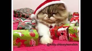 Santa kitty wont share gifts