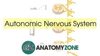 Autonomic Nervous System Introduction