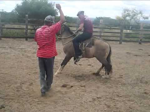 Montaria de Cavalo bravo Josima Bigode