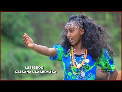 Xxx Mp4 Hot New Oromo Oromia Music Lubee Koo Galaanaa Gaarumsaa 3gp Sex
