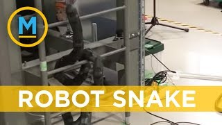 Scientists created a robotic snake that can climb ladders | Your Morning
