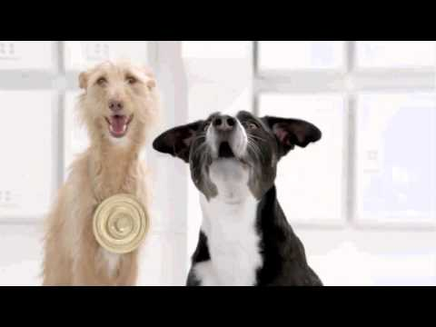 The Bark Side Volkswagen Game Commercial Teaser Super Bowl Xlvi 2012 Star Wars Dogs