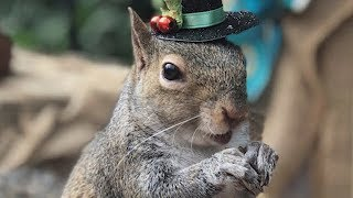 Squirrel Still Visits South Carolina Family 8 Years After They Rescued Her
