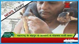 Mogli of Maharashtra : Dr.Prakash Amte live and love passionately wildest animals