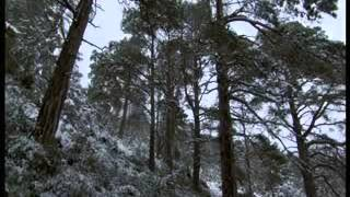 BBC Winterwatch 2014 - Episode 2 Part 1