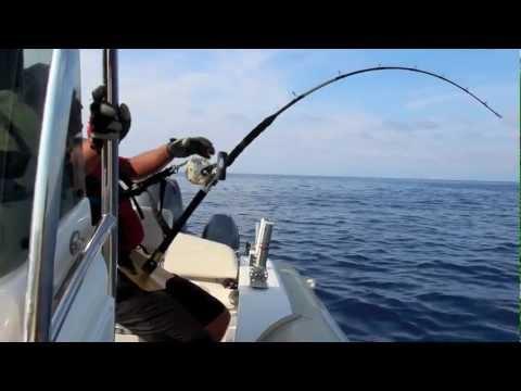 Un grande avversario tonno stimato 300 kg
