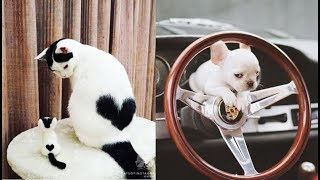 Cute baby animals Videos Compilation cute moment of the animals - Soo Cute! #6