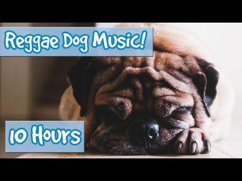 Xxx Mp4 Doggy Reggae Reggae Music For Dogs To Calm Anxiety And Stress Stop Hyperactivity And Soothe Dogs 3gp Sex
