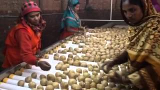 Potato processing plant for Bangladesh customer