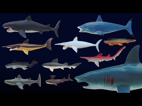 Prehistoric Sharks Featuring Megalodon The Kids Picture Show Fun & Educational Learning Video
