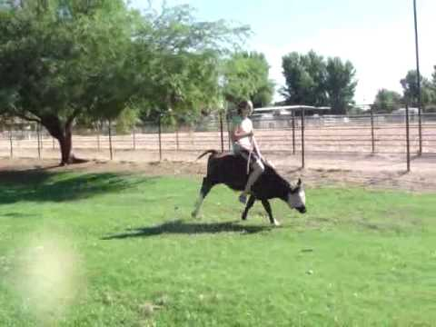 What our Cowgirl Does Ride the Cow