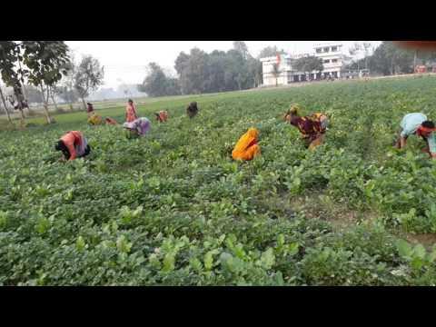 Xxx Mp4 My Farm Bishar Khejuri Ballia 3gp Sex