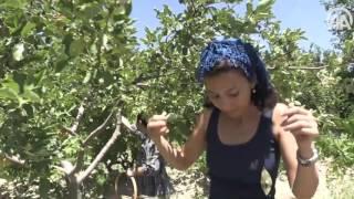 الاناضول | السياحة البيئية في تركيا..إزرع وكل من عرق جبينك