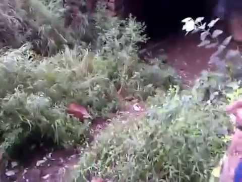 Xxx Mp4 Jungle Masti Part2 Purana Kila 3gp Sex