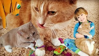 Cat UNBOXING Petstages Plush Toy 🐈Go Buggy😺Catnip Toss and Bat