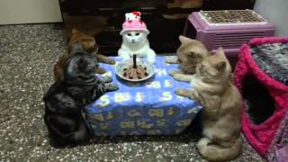 Cat Celebrates Her Birthday in Style