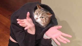 CAN YOU pass this SUPER hard TRY NOT TO LAUGH CHALLENGE? - Funny ANIMAL compilation