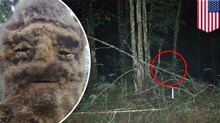 Bigfoot sighting: police warn public not to attack after N. Carolina sasquatch sighting - TomoNews
