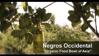 Organic Farming in the Philippines: Living Asia Channel Documentary Organic Negros Occidental