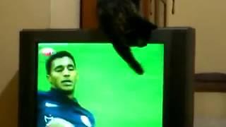 Maç izleyen kedi - Cat watching football match