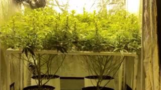 4x4 grow tents ep. 6
