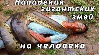 ШОК! Реальные нападения гигантских змей на человека