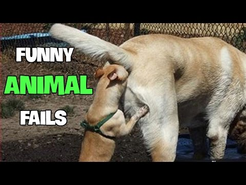 Funny Animal Fails 2016 Best Fails Compilation By FailADD