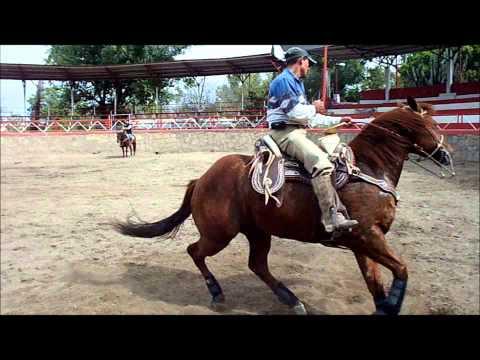 Precioso caballo charro RIENDA COMPLETA DE CALA en venta