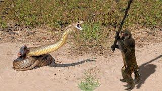 حيوانات شجاعه تخلص حيوانات اخري مواقف مؤثره لن تصدق ما ستراه سبحان الله .