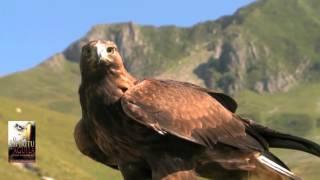 Presentacion libro El Espiritu del Aguila