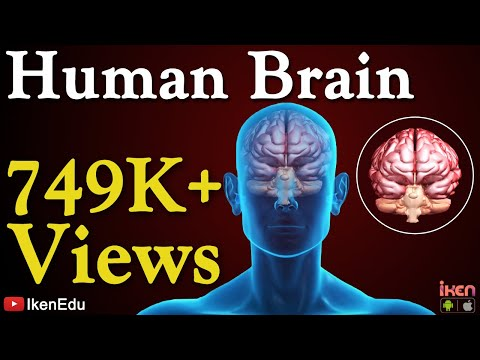 Xxx Mp4 Human Brain Animation Learn Anatomy Of Human Brain 3gp Sex