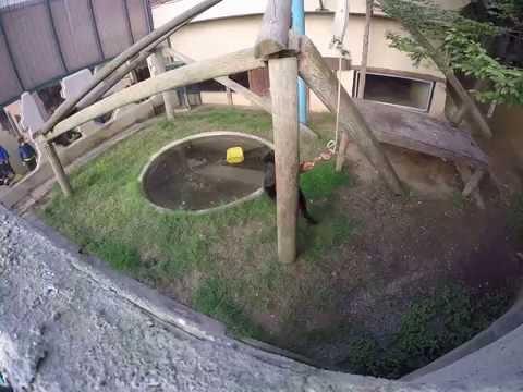 Darica hayvanat bahçesi jaguar beslenmesi