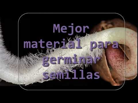 Mejor material para germinar semillas
