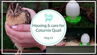 Housing and care for Coturnix / Japanese Quail