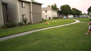Bulldog Catching Frisbee   Video Amazing Dog HD