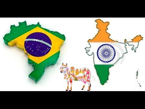 History on imports of Indian Zebu cattle to Brazil