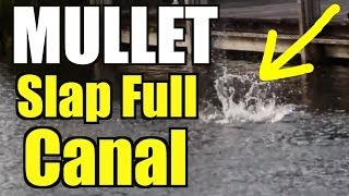 Mullet Run Hype Video SLAP FULL Canal Bait