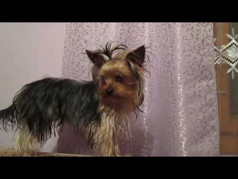 Xxx Mp4 Funny Dog A Funny Dog Videos Funny Animal Compilation 3gp Sex