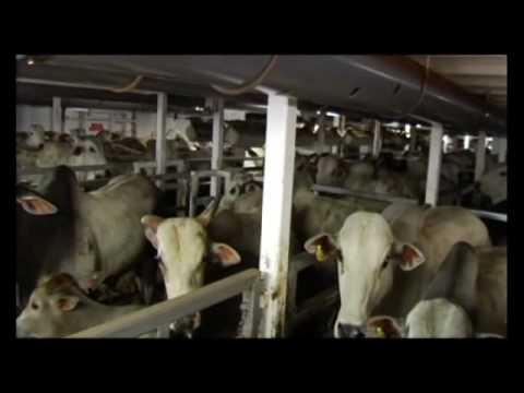 1 2 Transporte de bovinos vivos para o abate rota Brasil Líbano
