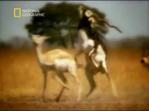 Xxx Mp4 Animal Sex Indian Deer Blackbuck 3gp Sex