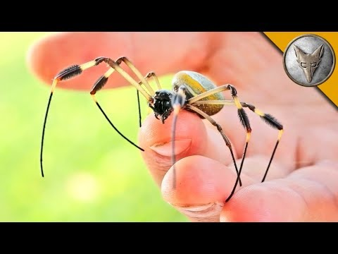 WILL IT BITE?! - BIG CREEPY SPIDER!