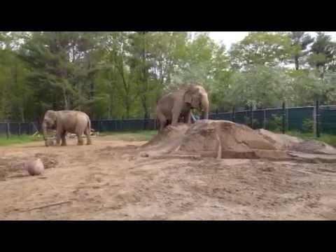 Xxx Mp4 Hope Elephants Rosie Queen Of The Sandpile 3gp Sex