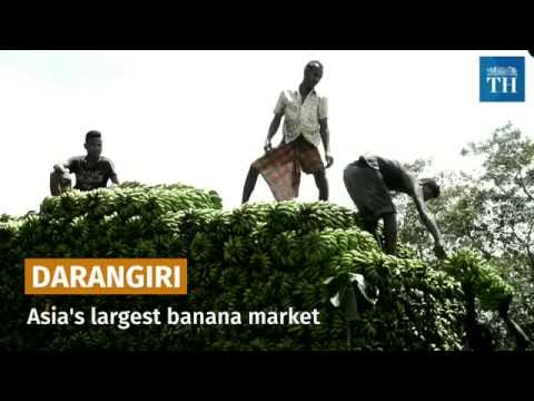 Darangiri: Asia's largest banana market