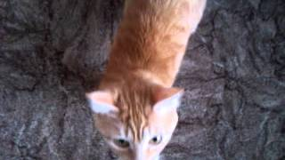 My funny cat video in .3gp - My funny cat youtube video