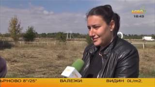 Конете на България: Седмо Национално изложение на коне от породата Дунавски кон...
