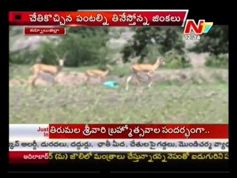Kurnool District Farmers Facing with deers Crisis